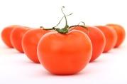 tomatoes-1239177_960_720